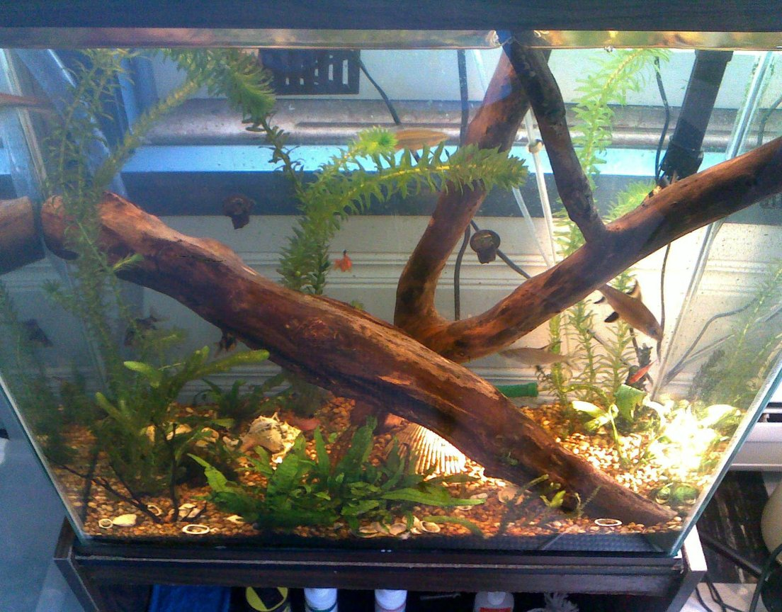 30 gallons freshwater fish tank (mostly fish and non-living decorations) - 1 year old 30 gallon tall tank.