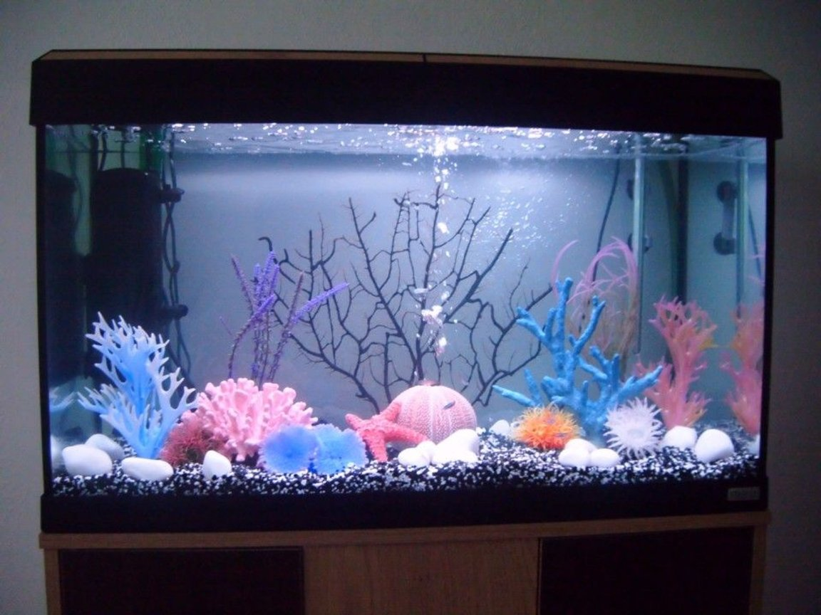 30 gallons freshwater fish tank (mostly fish and non-living decorations) - picture of fluval roma Decorated according to its style