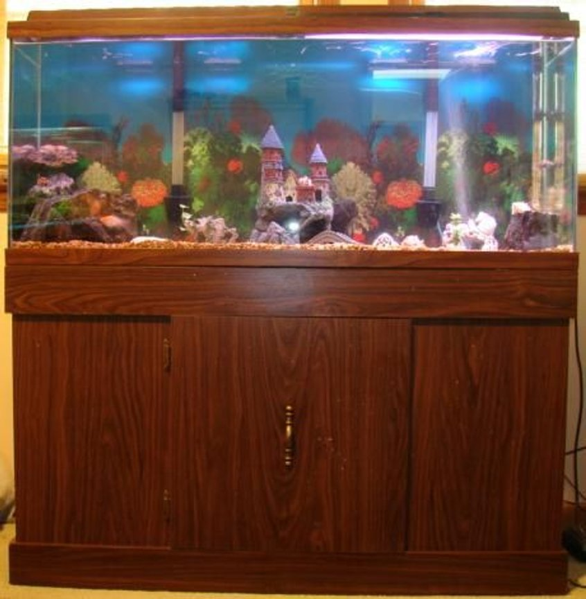 55 gallons freshwater fish tank (mostly fish and non-living decorations) - 55 gal fish tank