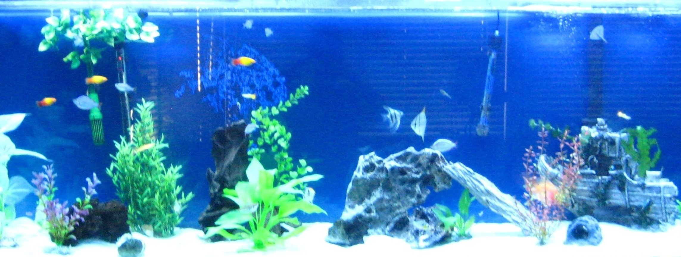 135 gallons freshwater fish tank (mostly fish and non-living decorations) - My 135 gallon tank and i just changed my tank to a salt water tank so i will get those pictures up soon