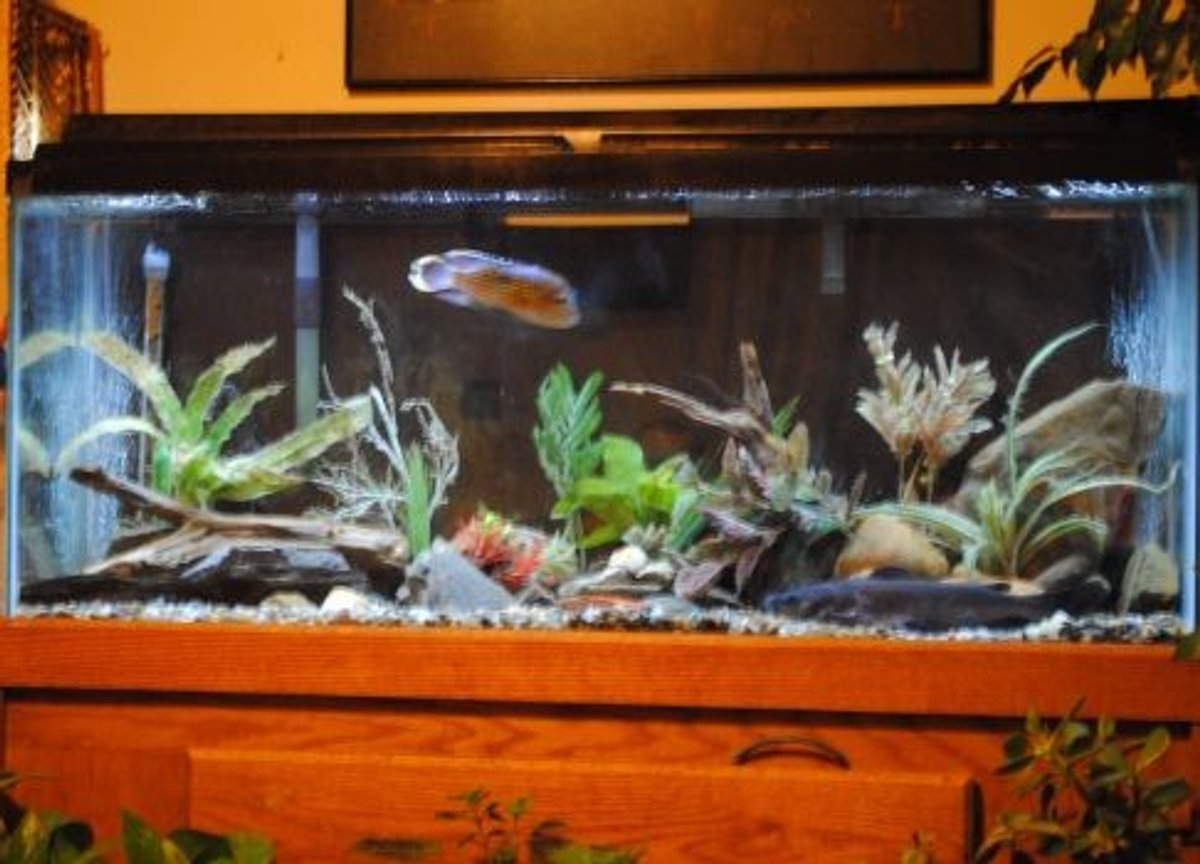 55 gallons freshwater fish tank (mostly fish and non-living decorations) - Update Aug 2010