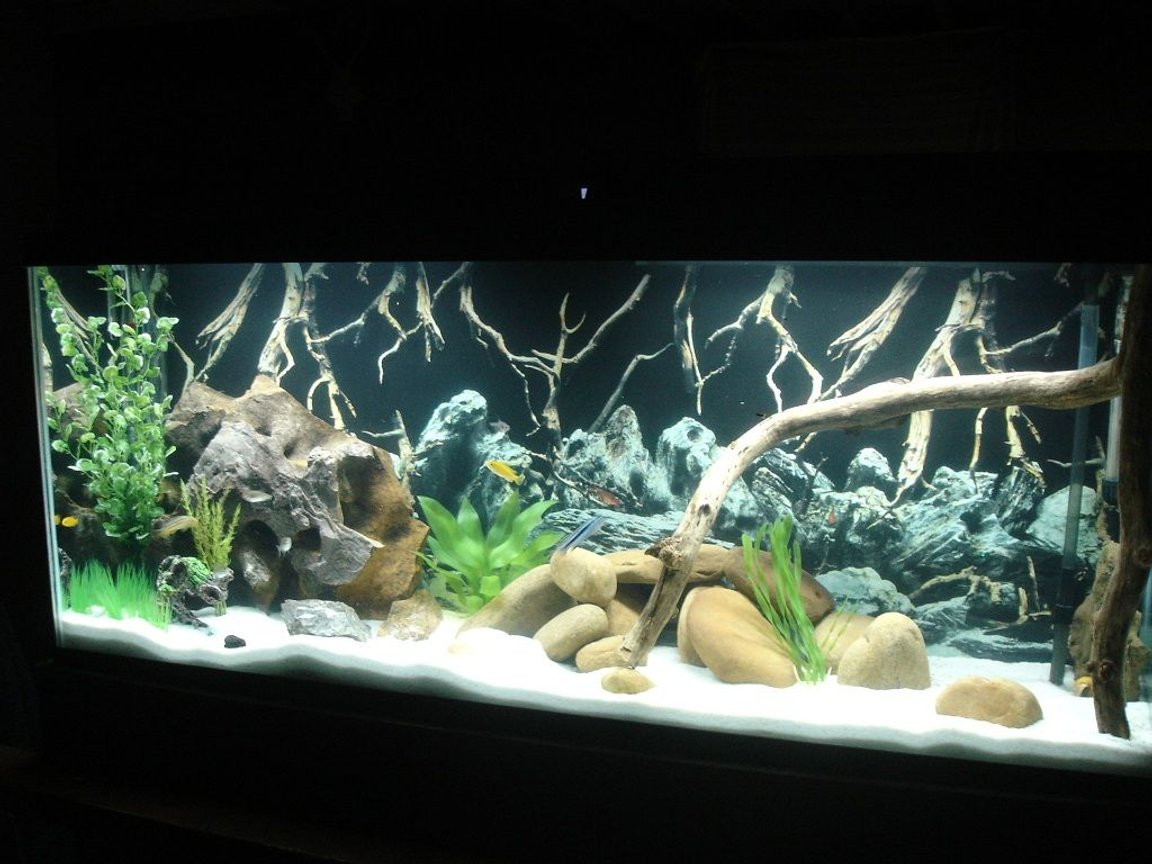 55 gallons freshwater fish tank (mostly fish and non-living decorations) - Marineland 55g Cichlid Tank