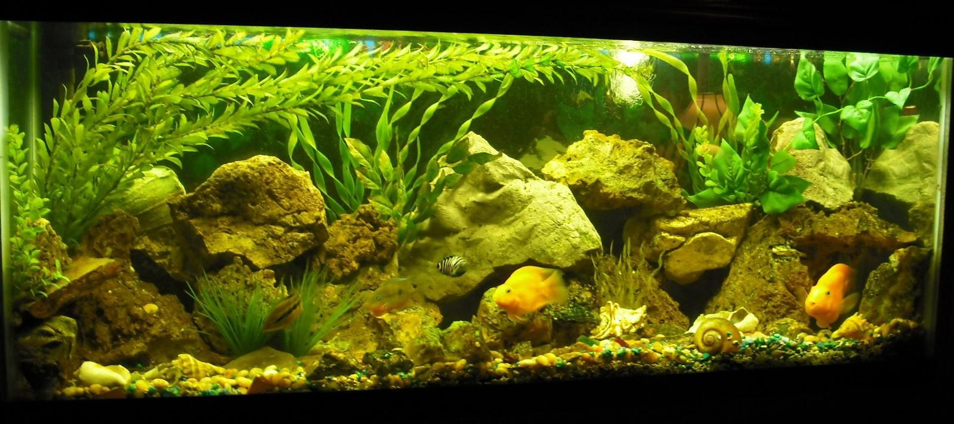 freshwater fish tank (mostly fish and non-living decorations) - 60 gallon w/ rock work & fake plants. The Fish are Cichlid
