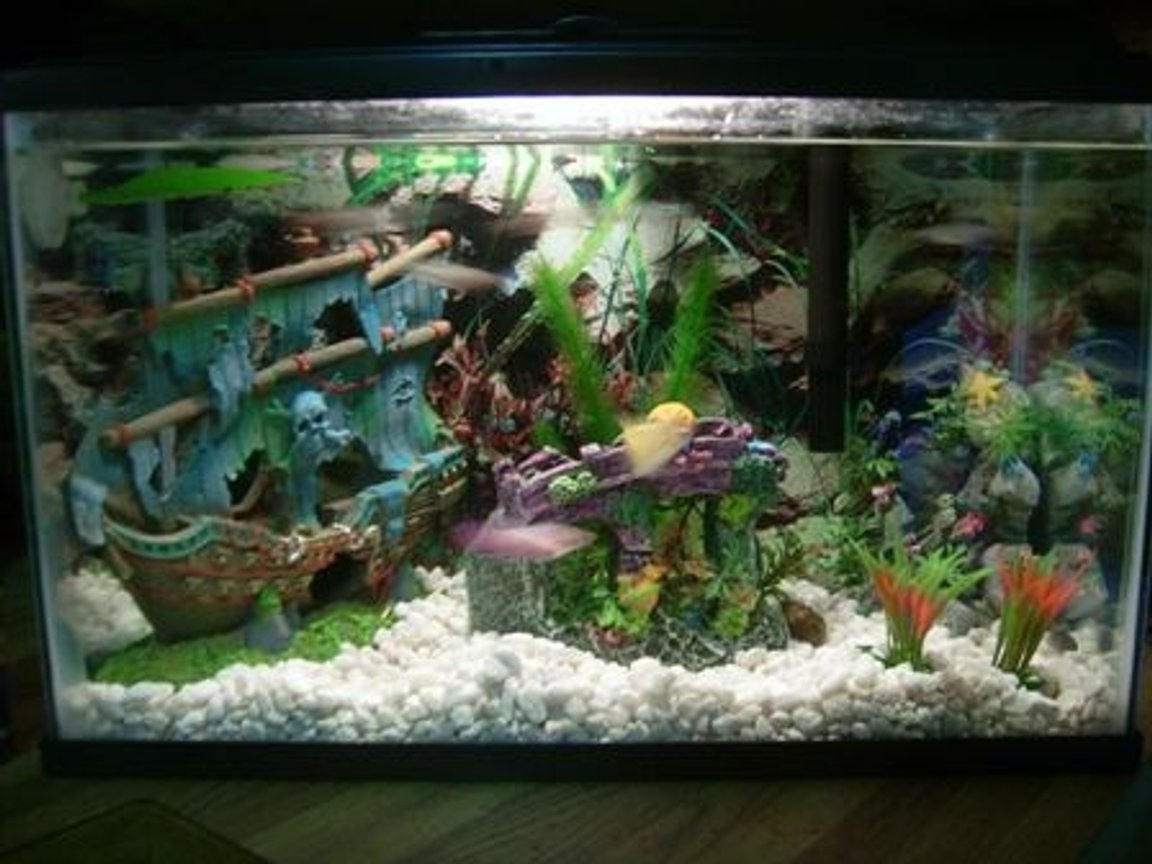 6 gallons freshwater fish tank (mostly fish and non-living decorations) - 5.5 gallon tank