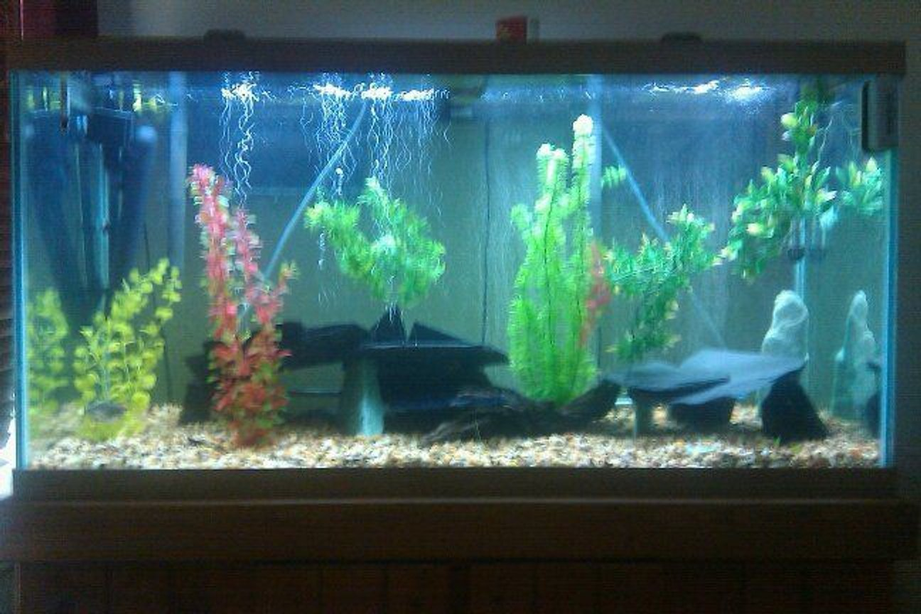 55 gallons freshwater fish tank (mostly fish and non-living decorations) - 90 gallon tank ... 3 payara (vampire fish), 1 silver barracuda, 1 bristlenose pleco, 2 aquaclear 500's, 2 heaters, 1 uv sterilizer