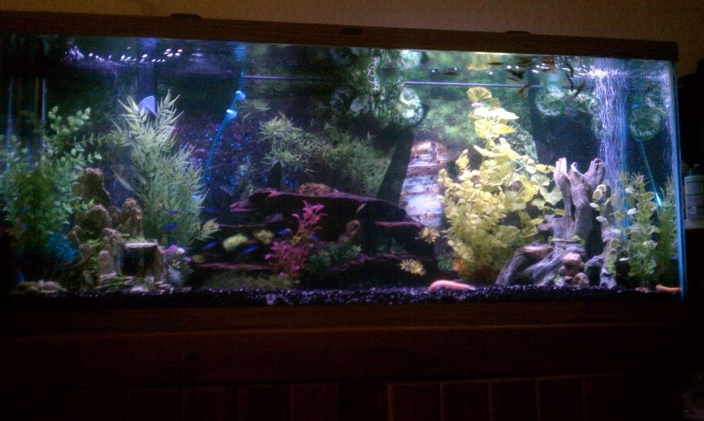 55 gallons freshwater fish tank (mostly fish and non-living decorations) - 55 Gallon Community Tank