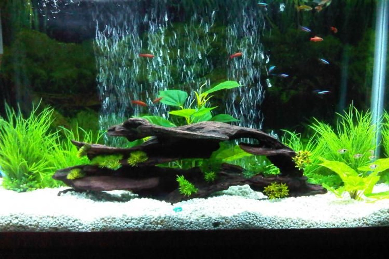 45 gallons freshwater fish tank (mostly fish and non-living decorations) - my first upload :D