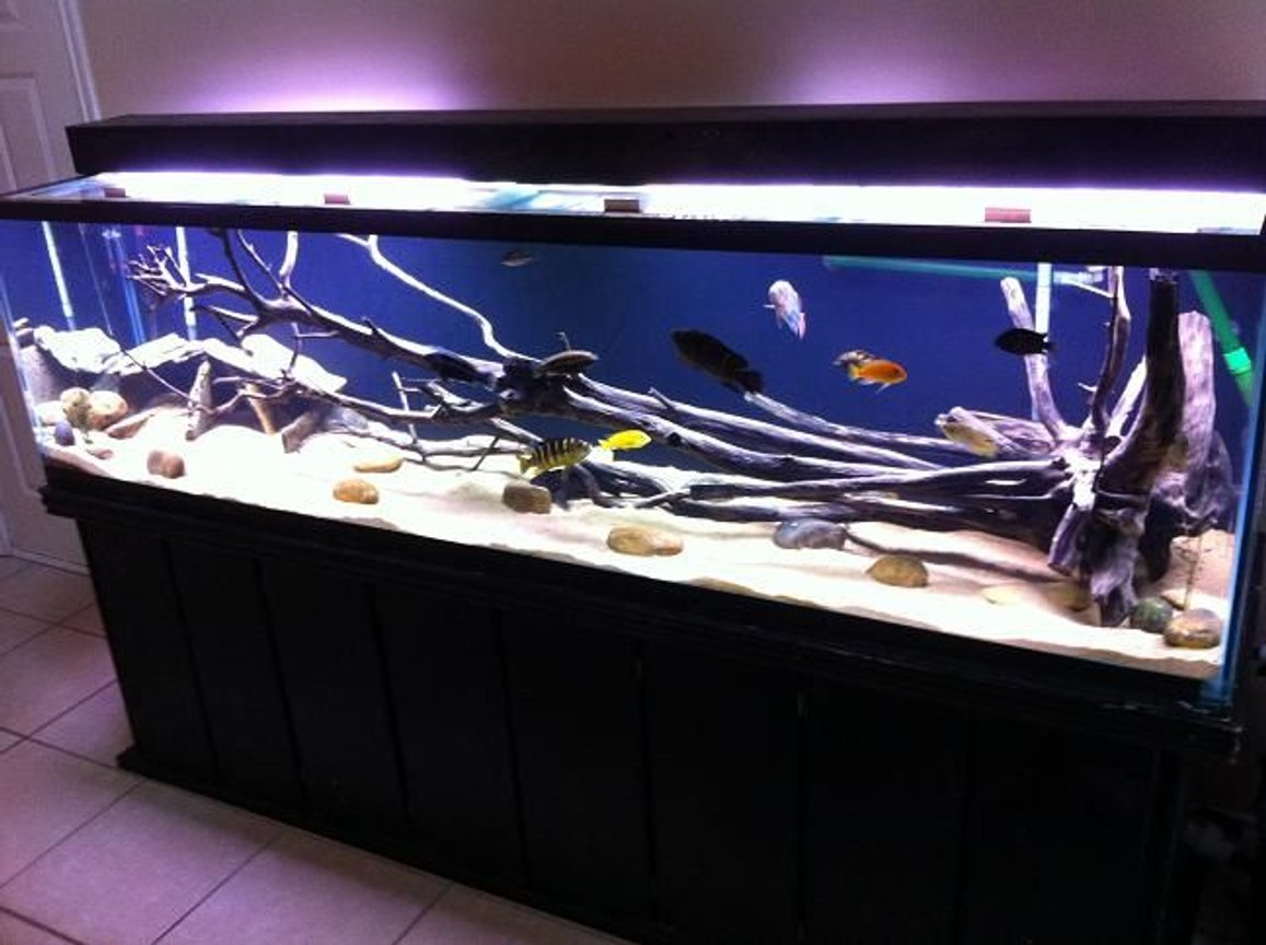 240 gallons freshwater fish tank (mostly fish and non-living decorations) - 240 long