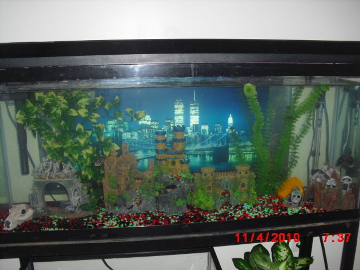 50 gallons freshwater fish tank (mostly fish and non-living decorations) - skull island