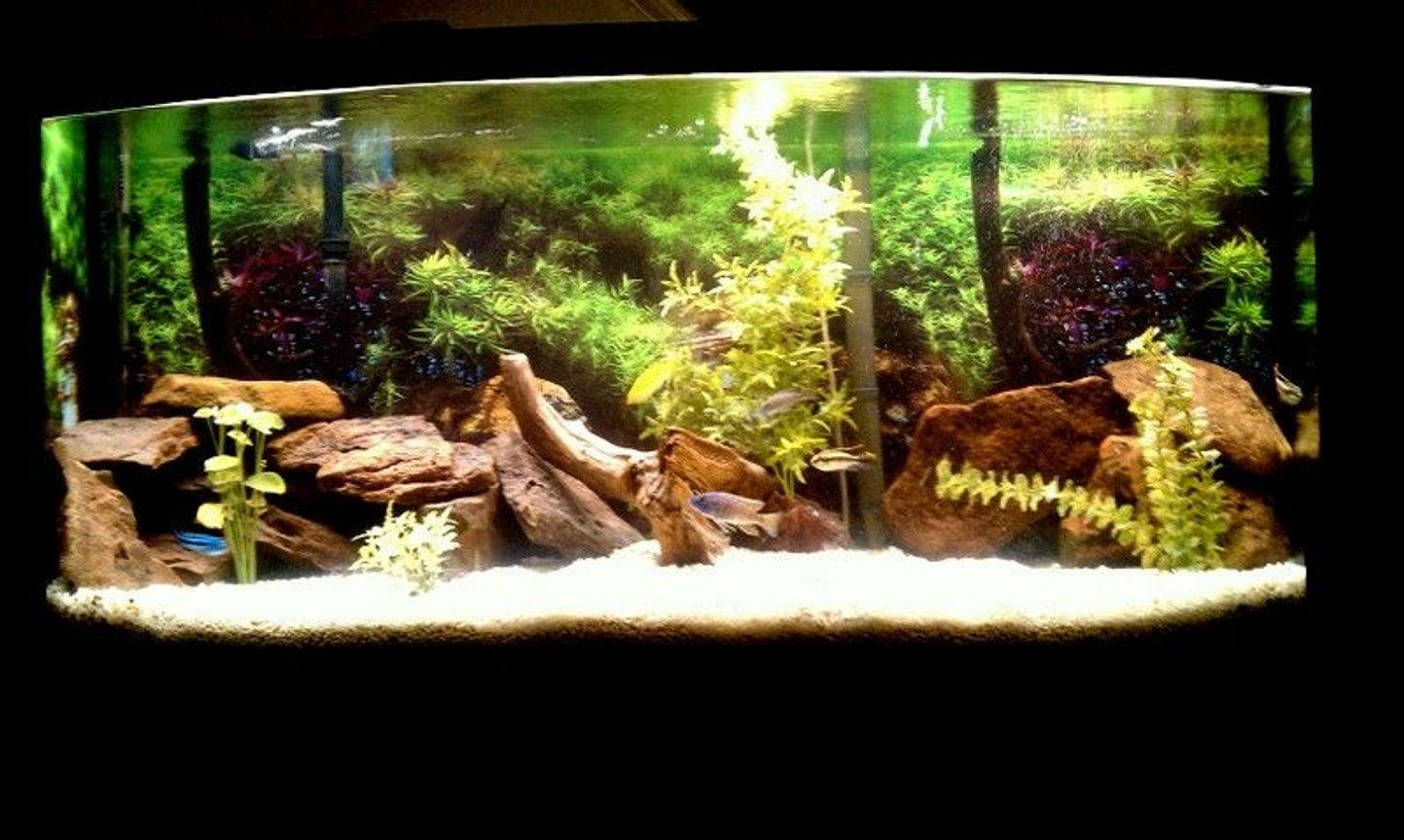 72 gallons freshwater fish tank (mostly fish and non-living decorations) - New Cichlid Tank