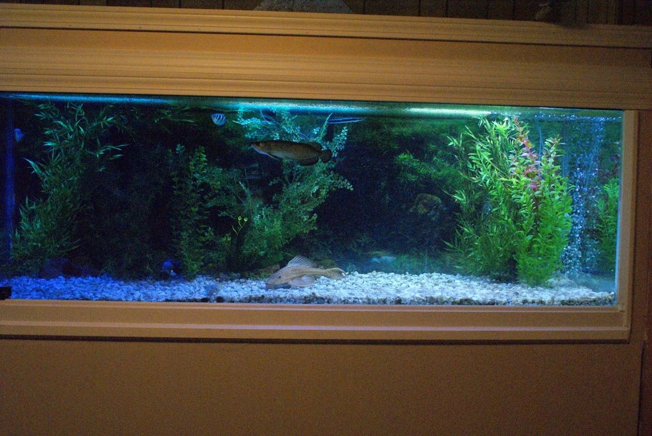 180 gallons freshwater fish tank (mostly fish and non-living decorations) - Another view of the fish tank