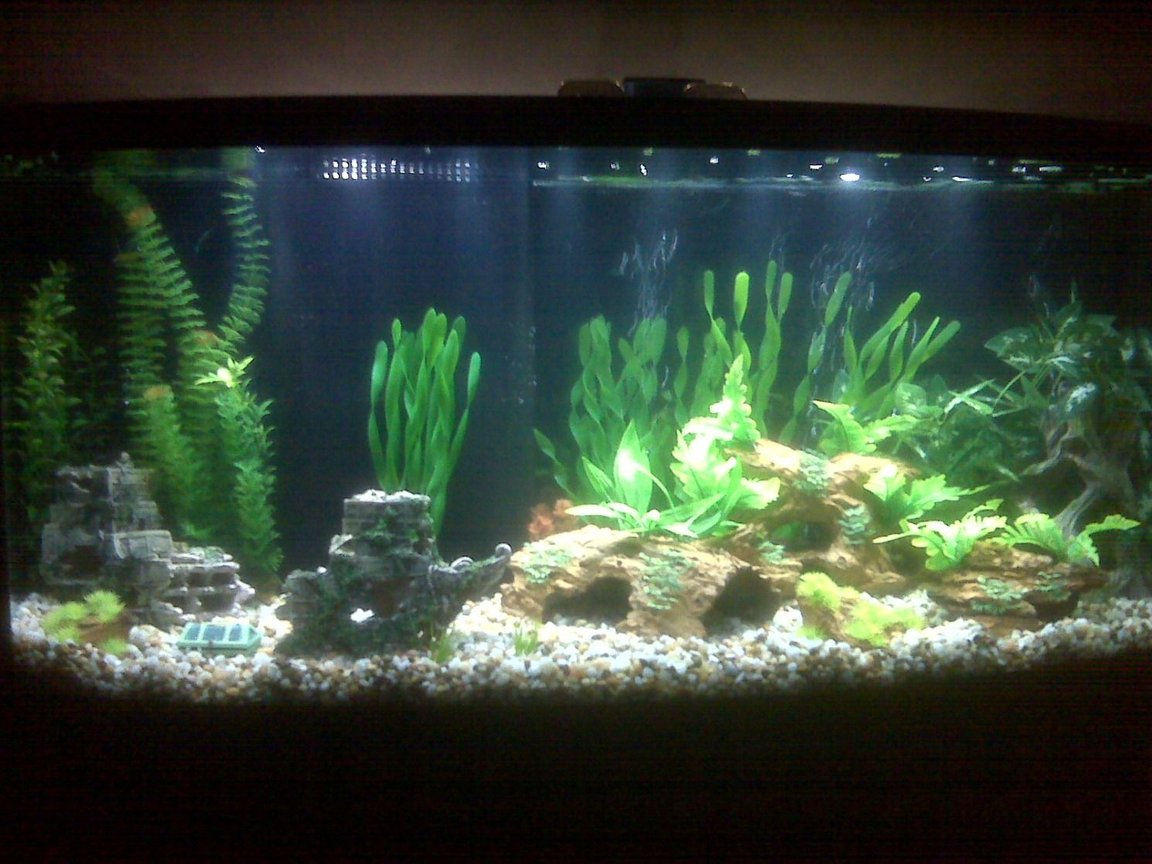 72 gallons freshwater fish tank (mostly fish and non-living decorations) - New 72 gallon being cycled.