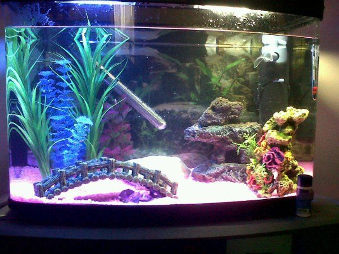 14 gallons freshwater fish tank (mostly fish and non-living decorations) - 64 litre tankkk, 2 mollies and 3 otto cats, with orniments and plastic plants with decorations