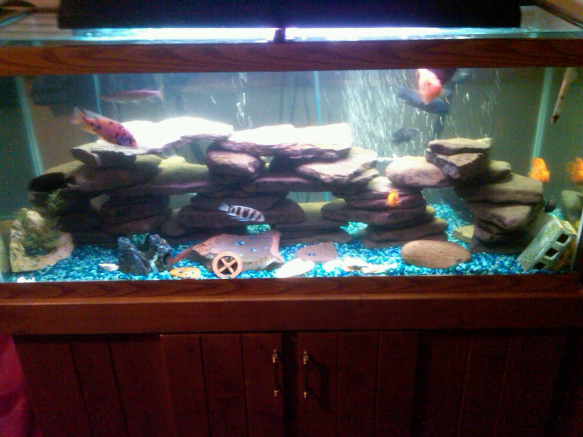 75 gallons freshwater fish tank (mostly fish and non-living decorations) - Most recent picture of my tank. Daytime lighting.