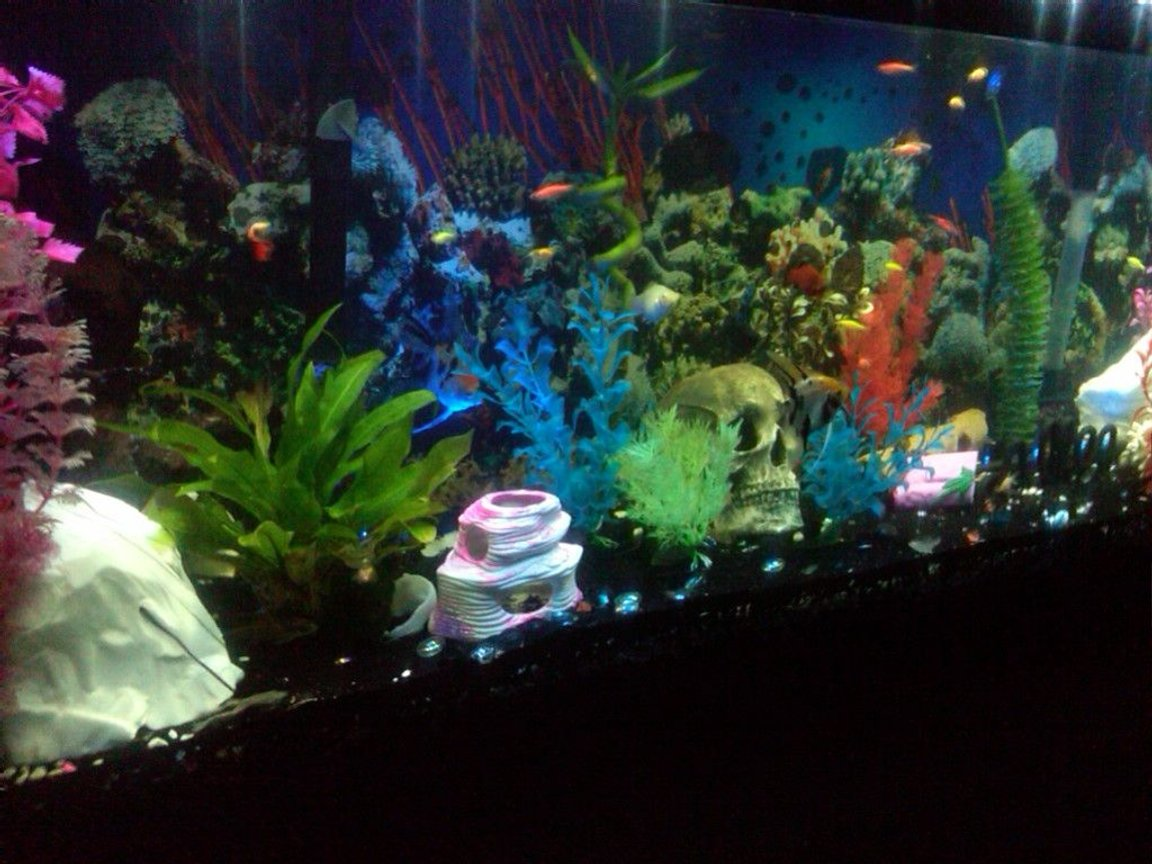 55 gallons freshwater fish tank (mostly fish and non-living decorations) - my 55 gallon freshwater tank!