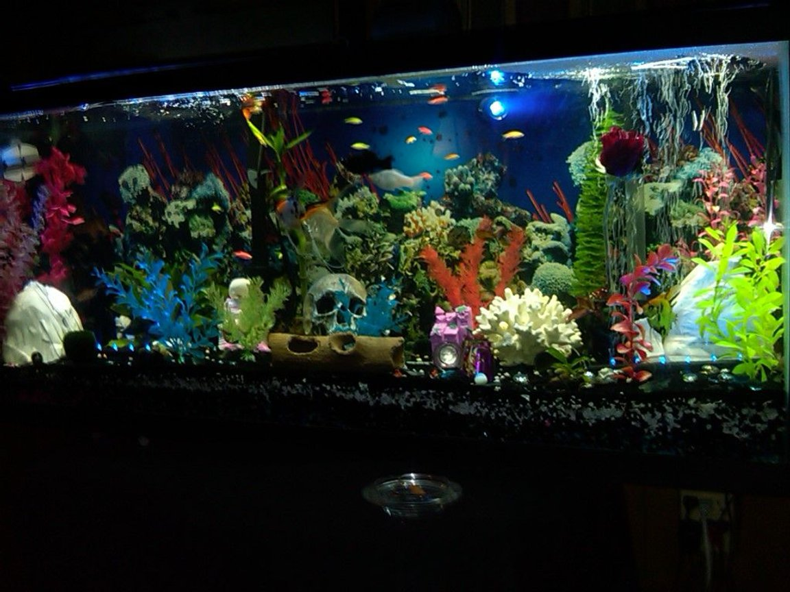 55 gallons freshwater fish tank (mostly fish and non-living decorations) - freshwater community 55 gallon tank!!