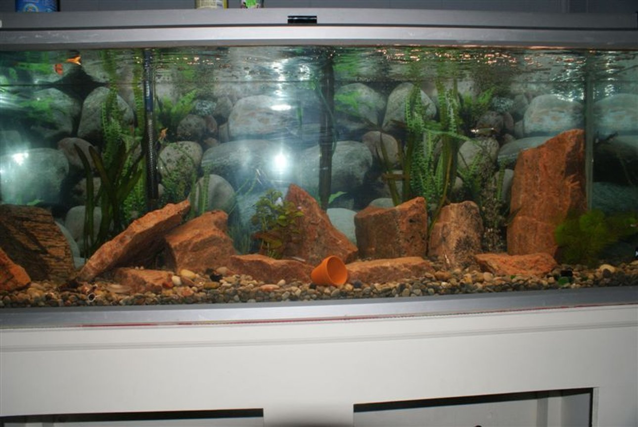 75 gallons freshwater fish tank (mostly fish and non-living decorations) - 75 gallon tank...hard to fit in picture