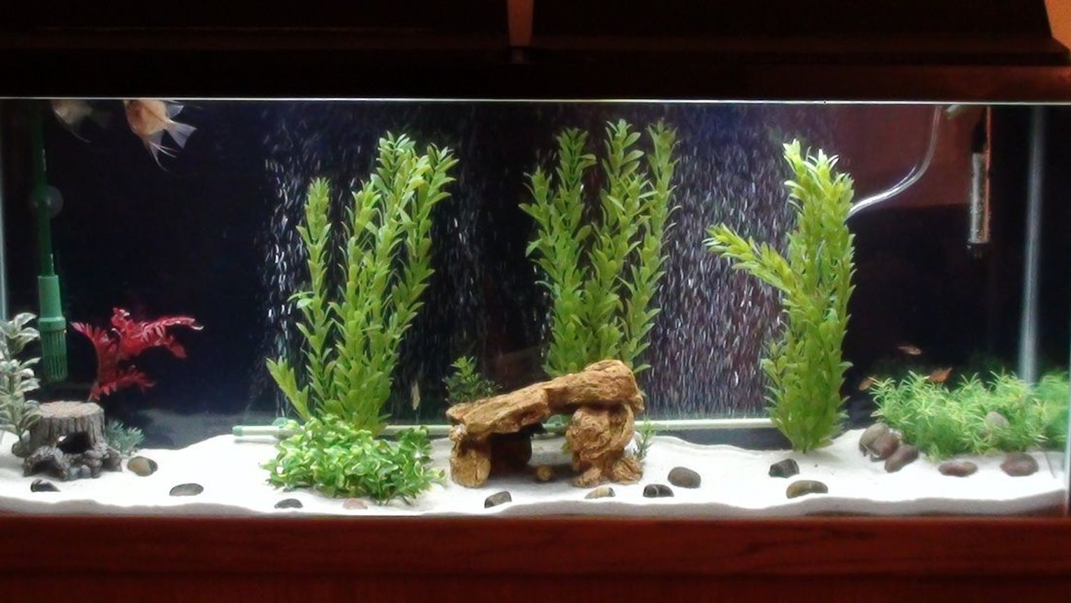 55 gallons freshwater fish tank (mostly fish and non-living decorations) - My Newest 55 Gallon freshwater tank!!