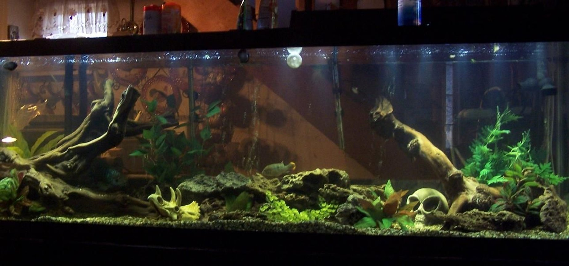 150 gallons freshwater fish tank (mostly fish and non-living decorations) - little devil 9/2010