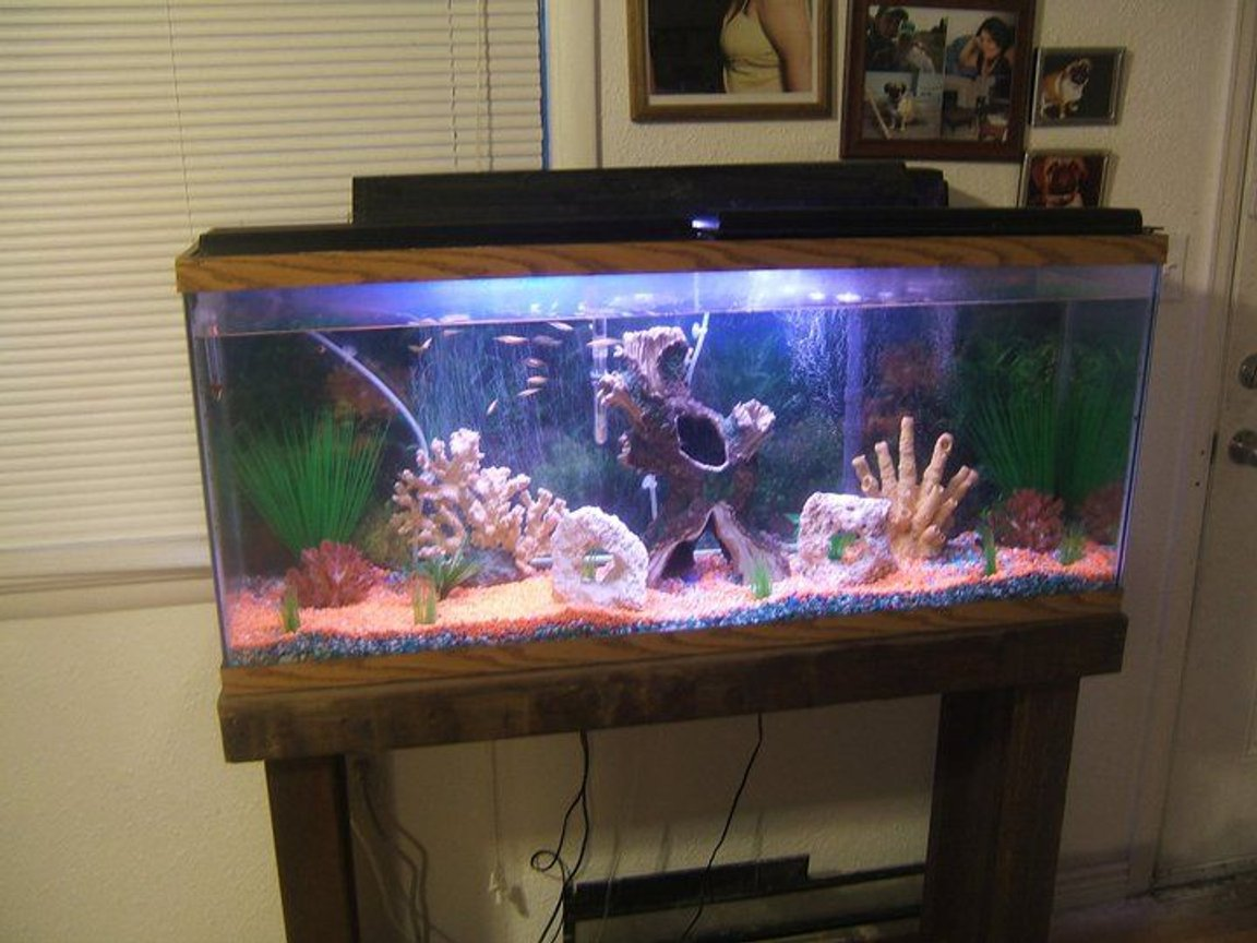55 gallons freshwater fish tank (mostly fish and non-living decorations) - Living room tank
