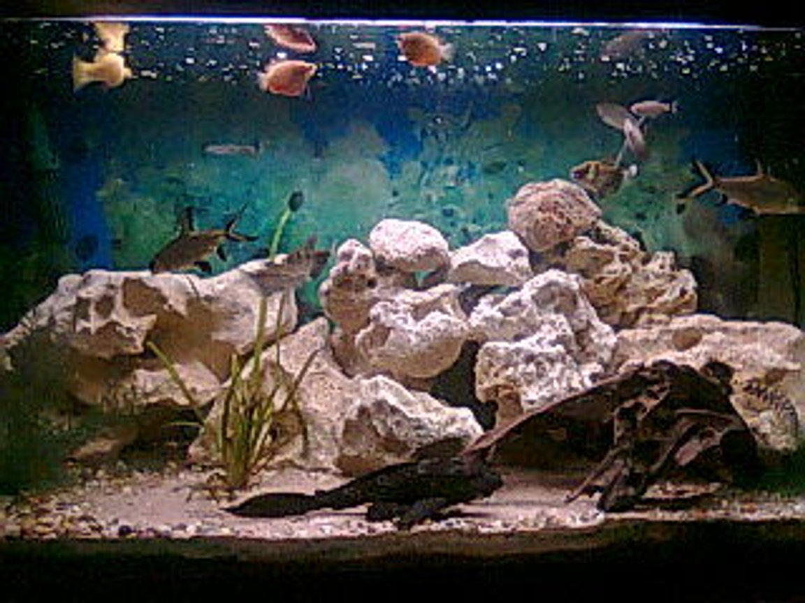 3 gallons freshwater fish tank (mostly fish and non-living decorations) - comeing on nicely