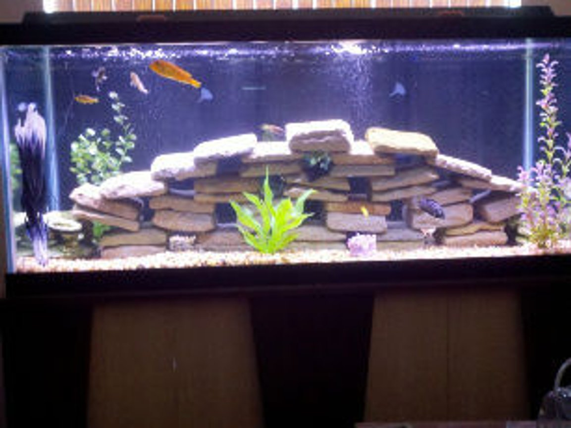 75 gallons freshwater fish tank (mostly fish and non-living decorations) - As of 4/16/11