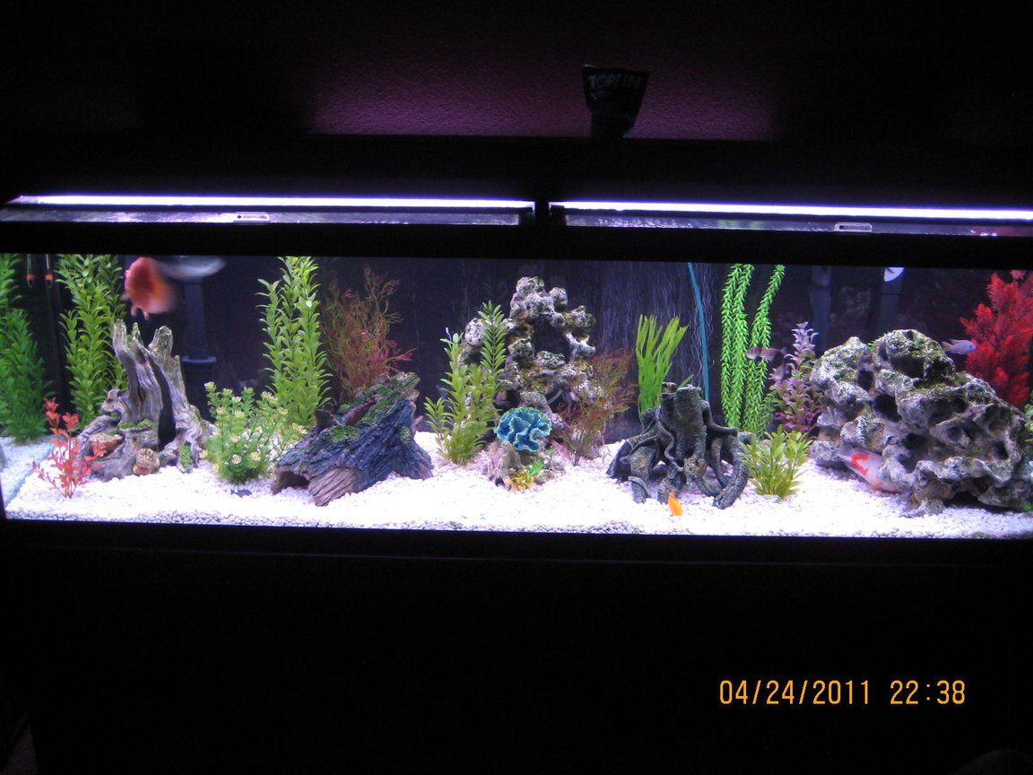 125 gallons freshwater fish tank (mostly fish and non-living decorations) - Sorry my fish did not want to be photographed.