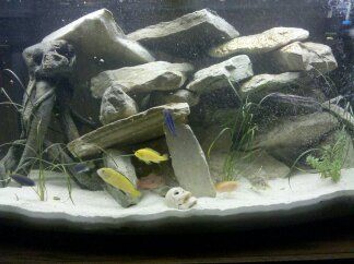 46 gallons freshwater fish tank (mostly fish and non-living decorations) - lots of rocks bowfront 46 gal