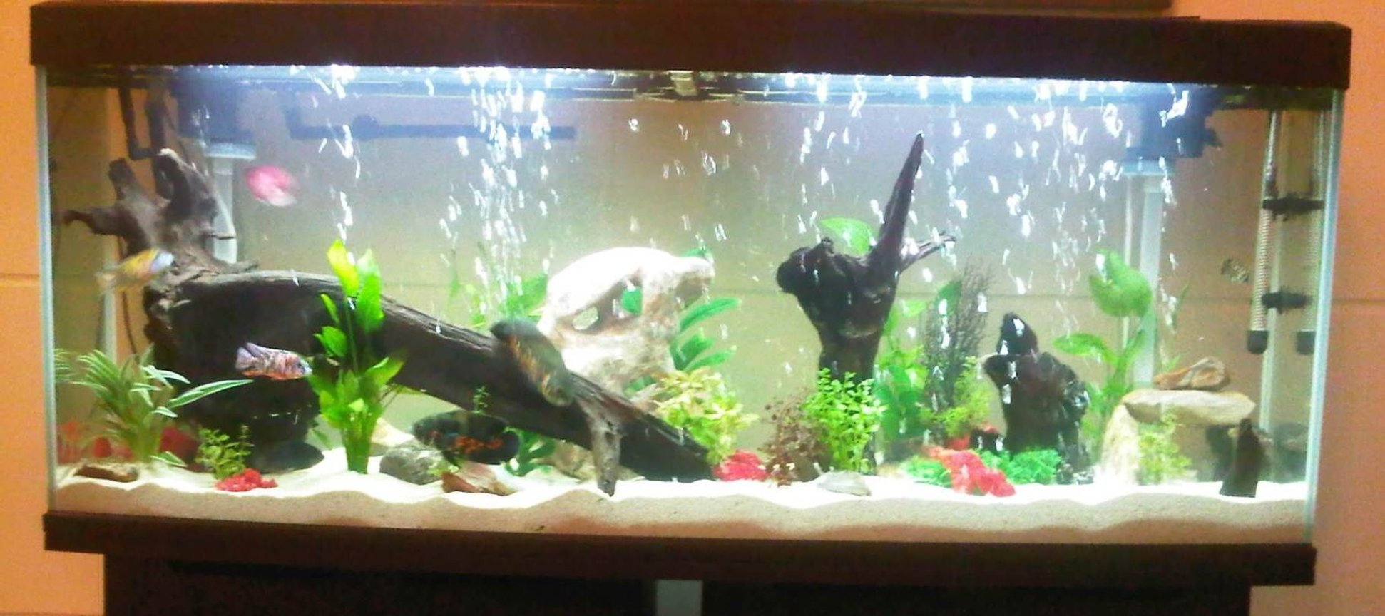 68 gallons freshwater fish tank (mostly fish and non-living decorations) - ----