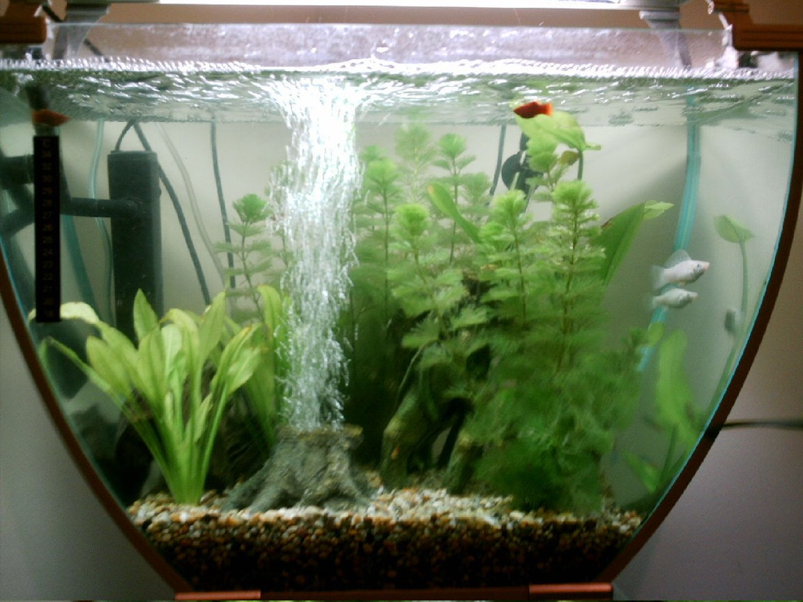 16 gallons freshwater fish tank (mostly fish and non-living decorations) - My 1st tank....Please rate :-)