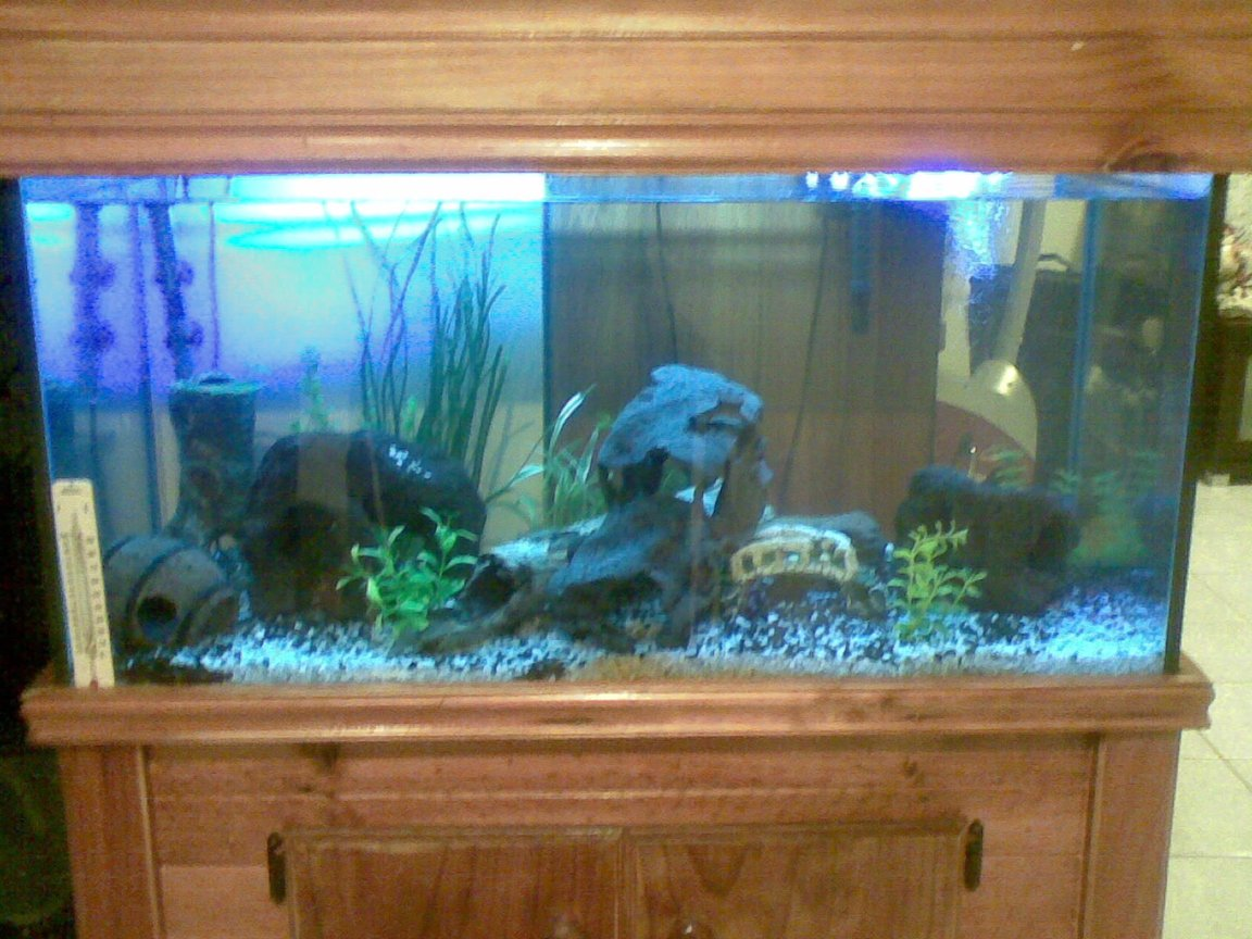 50 gallons freshwater fish tank (mostly fish and non-living decorations) - My fish love to hide there are fish in there.... Really!