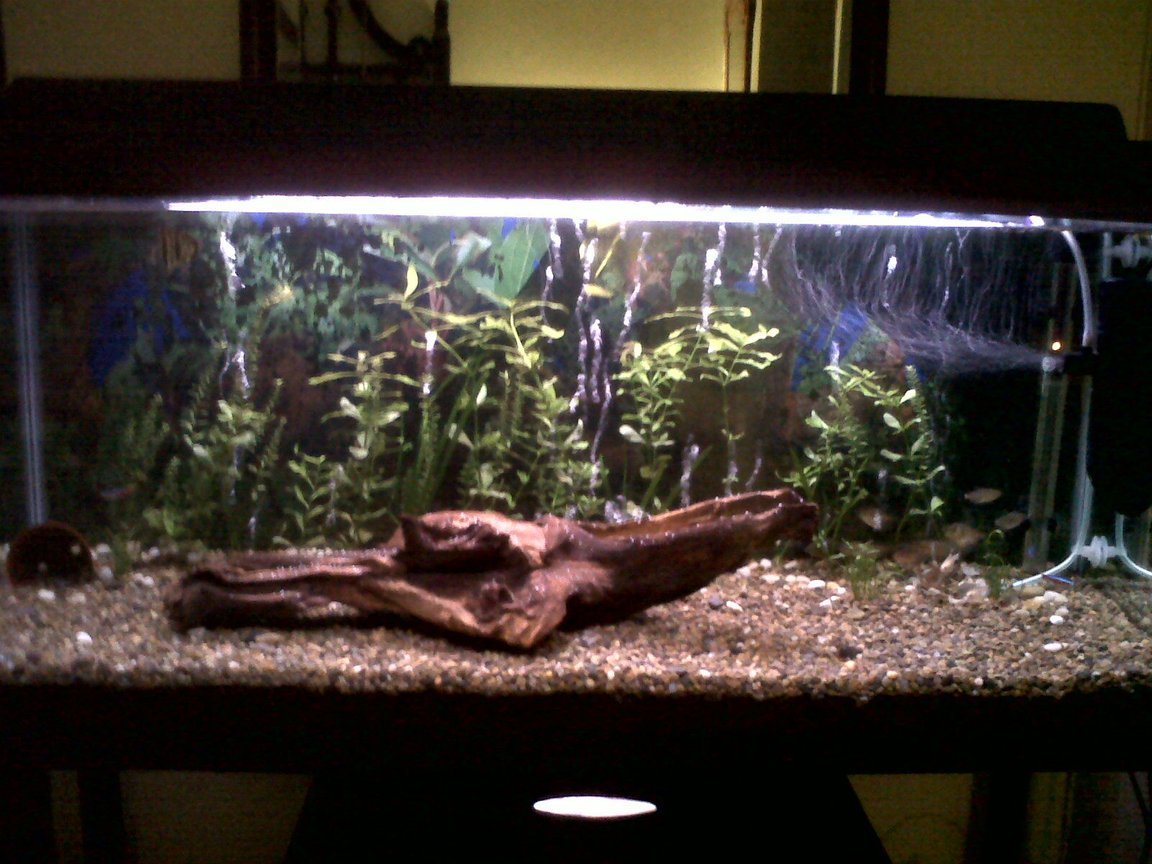 25 gallons freshwater fish tank (mostly fish and non-living decorations) - My 3foot fish tank