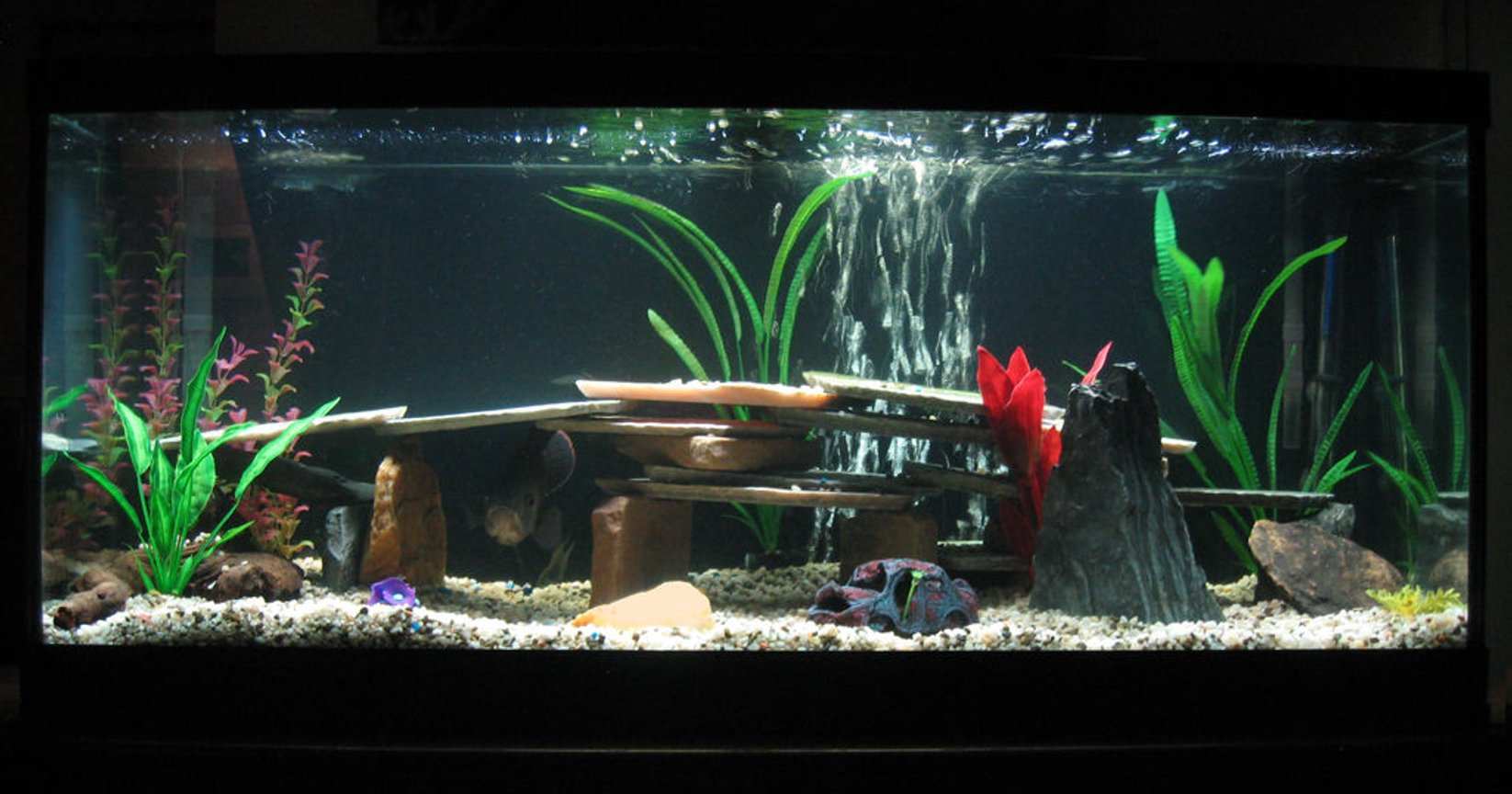 75 gallons freshwater fish tank (mostly fish and non-living decorations) - 75 Gallon Freshwater Tank with 1 Tiger Oscar.