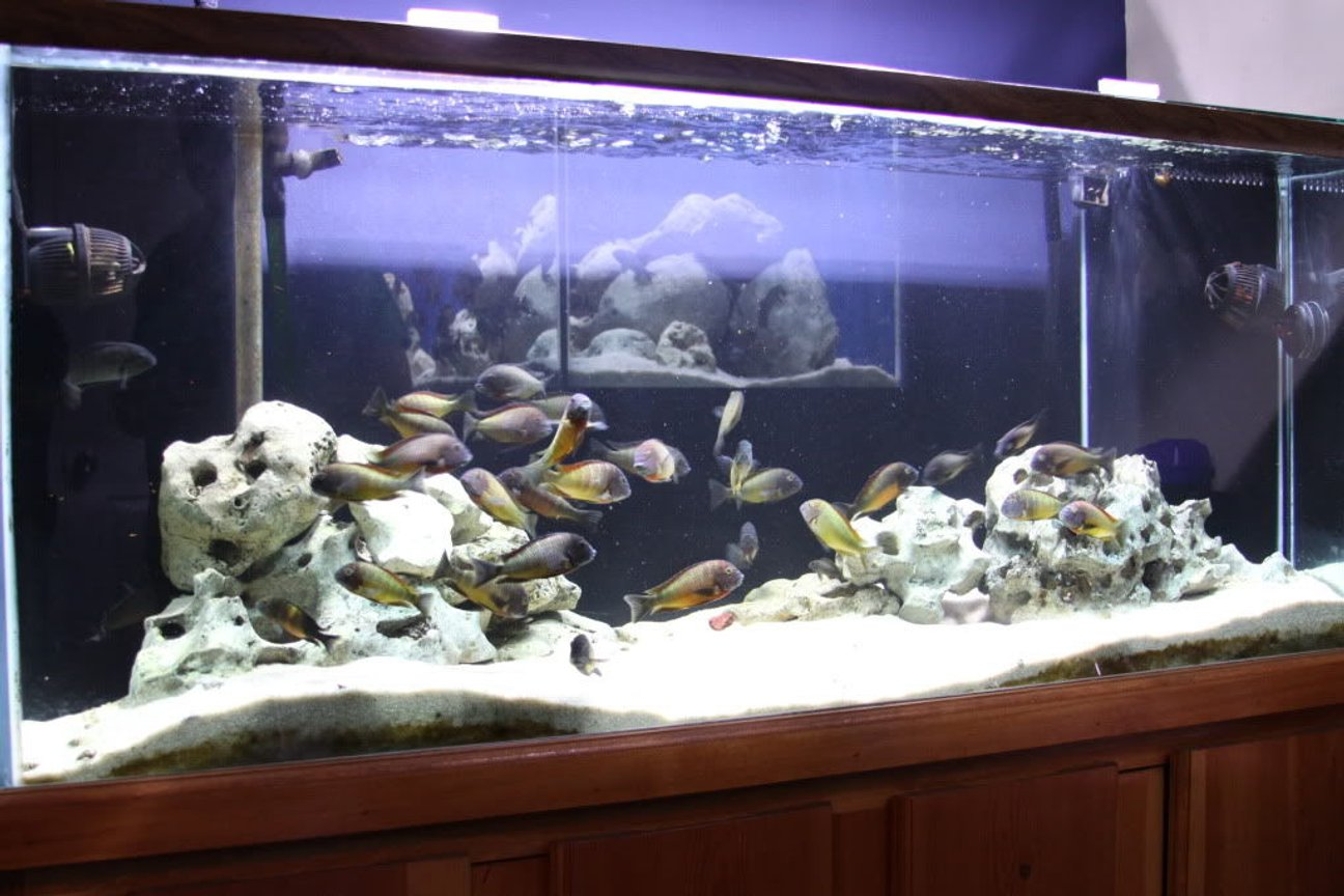 125 gallons freshwater fish tank (mostly fish and non-living decorations) - 125 gallon with WC Trophs