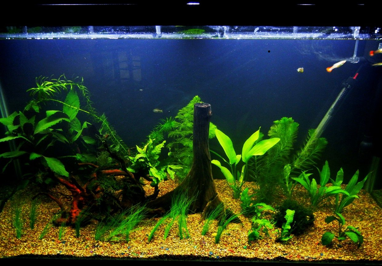 90 gallons freshwater fish tank (mostly fish and non-living decorations) - Have a nice day!