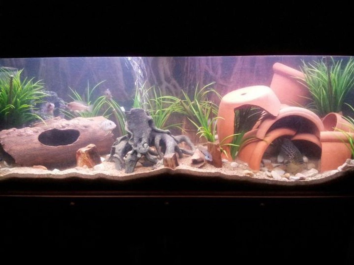 20 gallons freshwater fish tank (mostly fish and non-living decorations) - mt sweet tank
