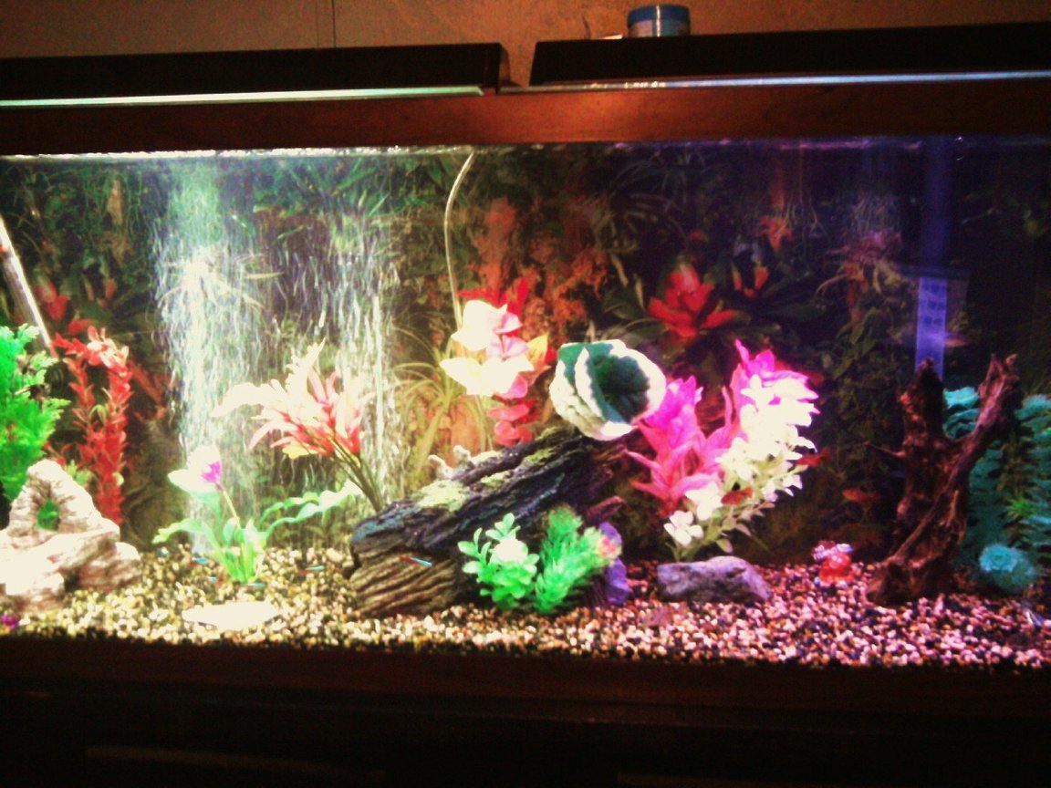 55 gallons freshwater fish tank (mostly fish and non-living decorations) - new driftwood, log, plants, bubbler