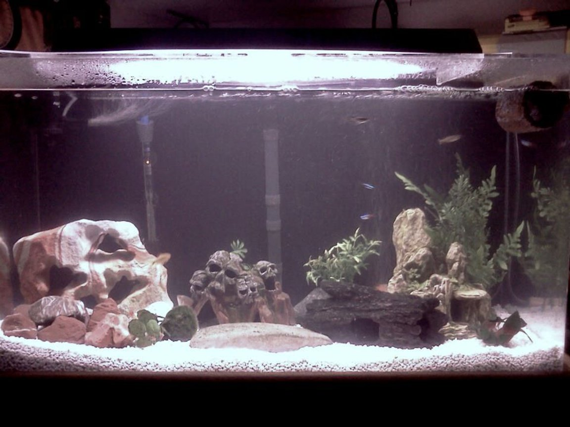 35 gallons freshwater fish tank (mostly fish and non-living decorations) - My current fish tank set up