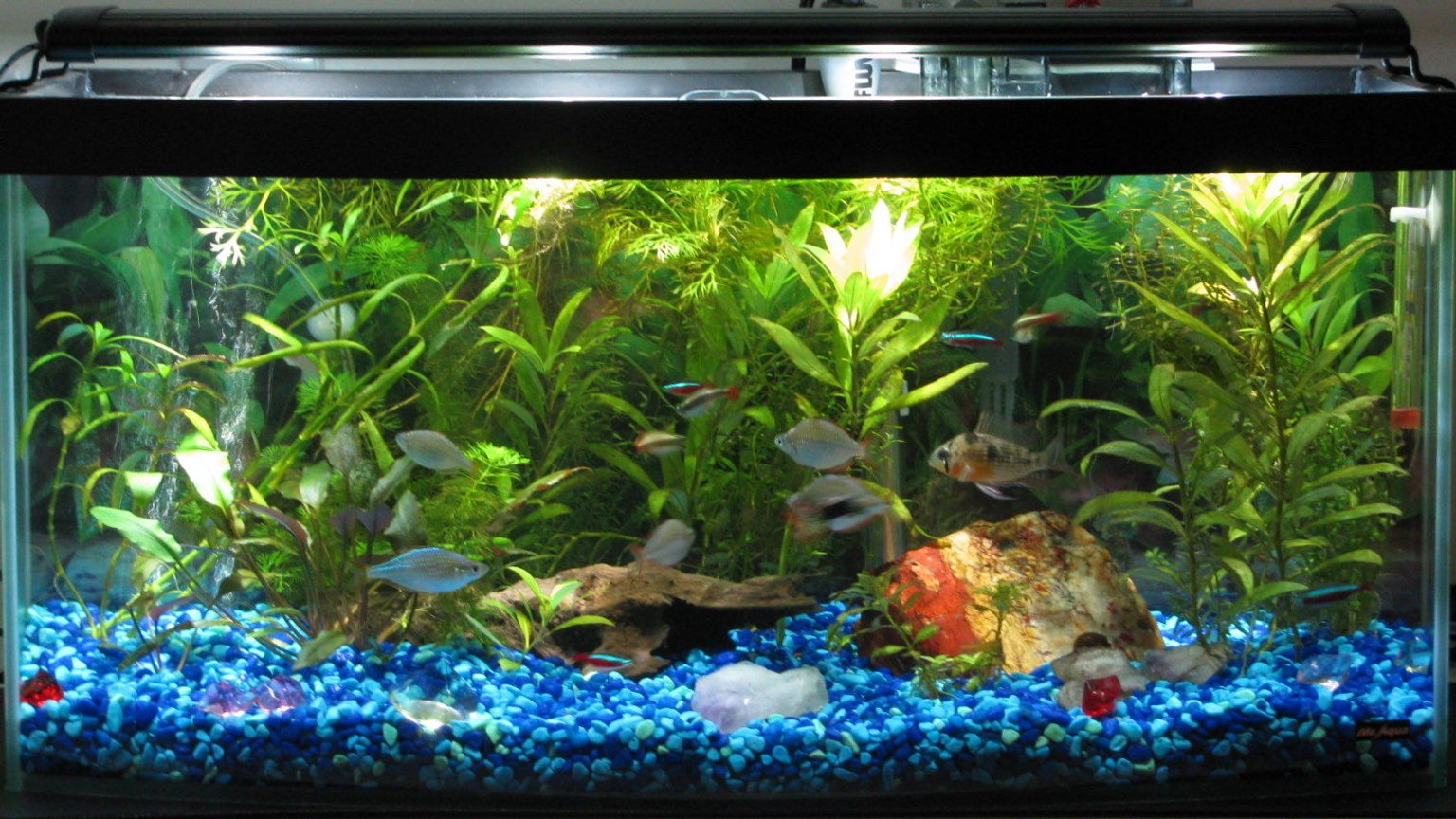 13 gallons freshwater fish tank (mostly fish and non-living decorations) - 13 gallon bowfront