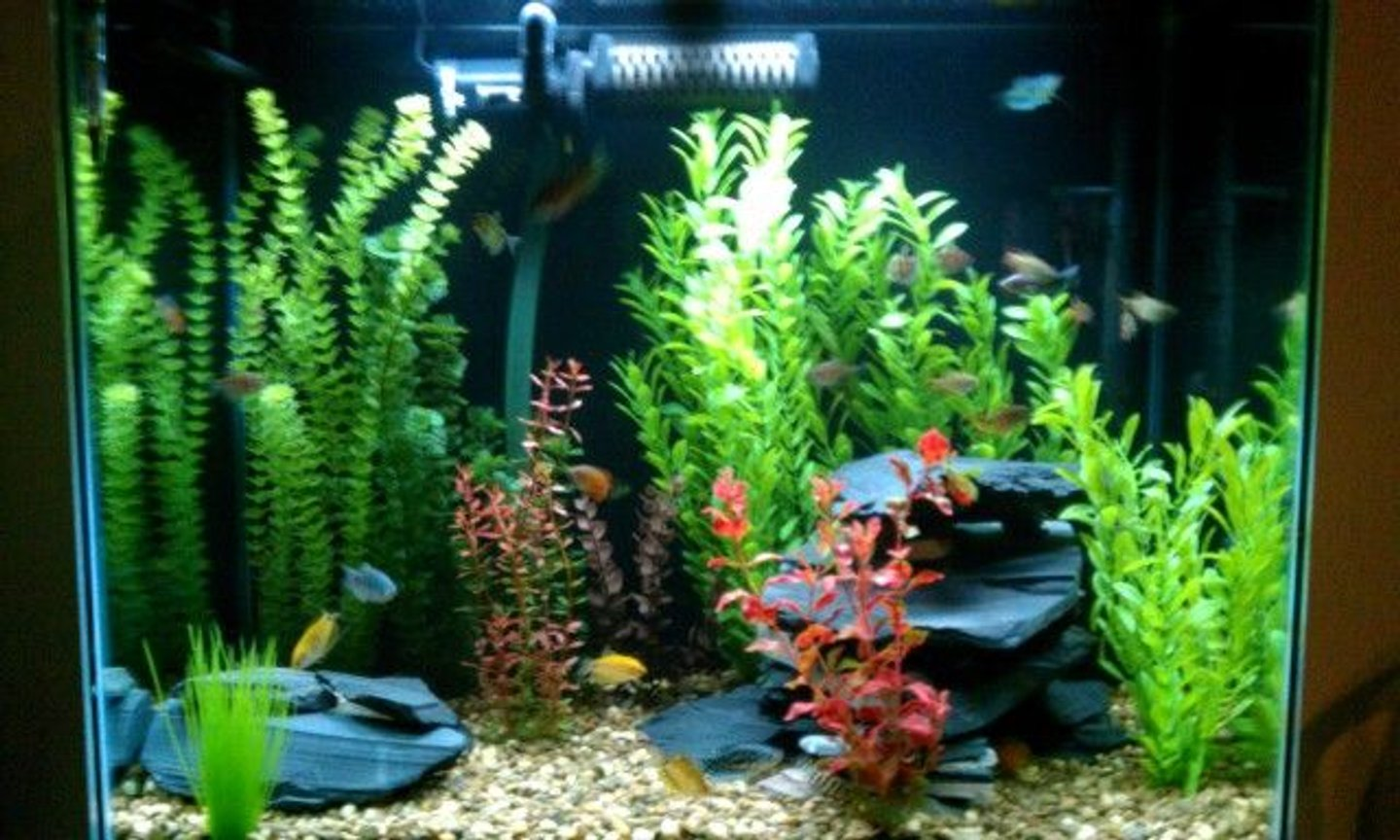 56 gallons freshwater fish tank (mostly fish and non-living decorations) - 56 gallon, coarse gravel, assorted artifical plants, 40lbs of black slate, 1 month fully stocked...