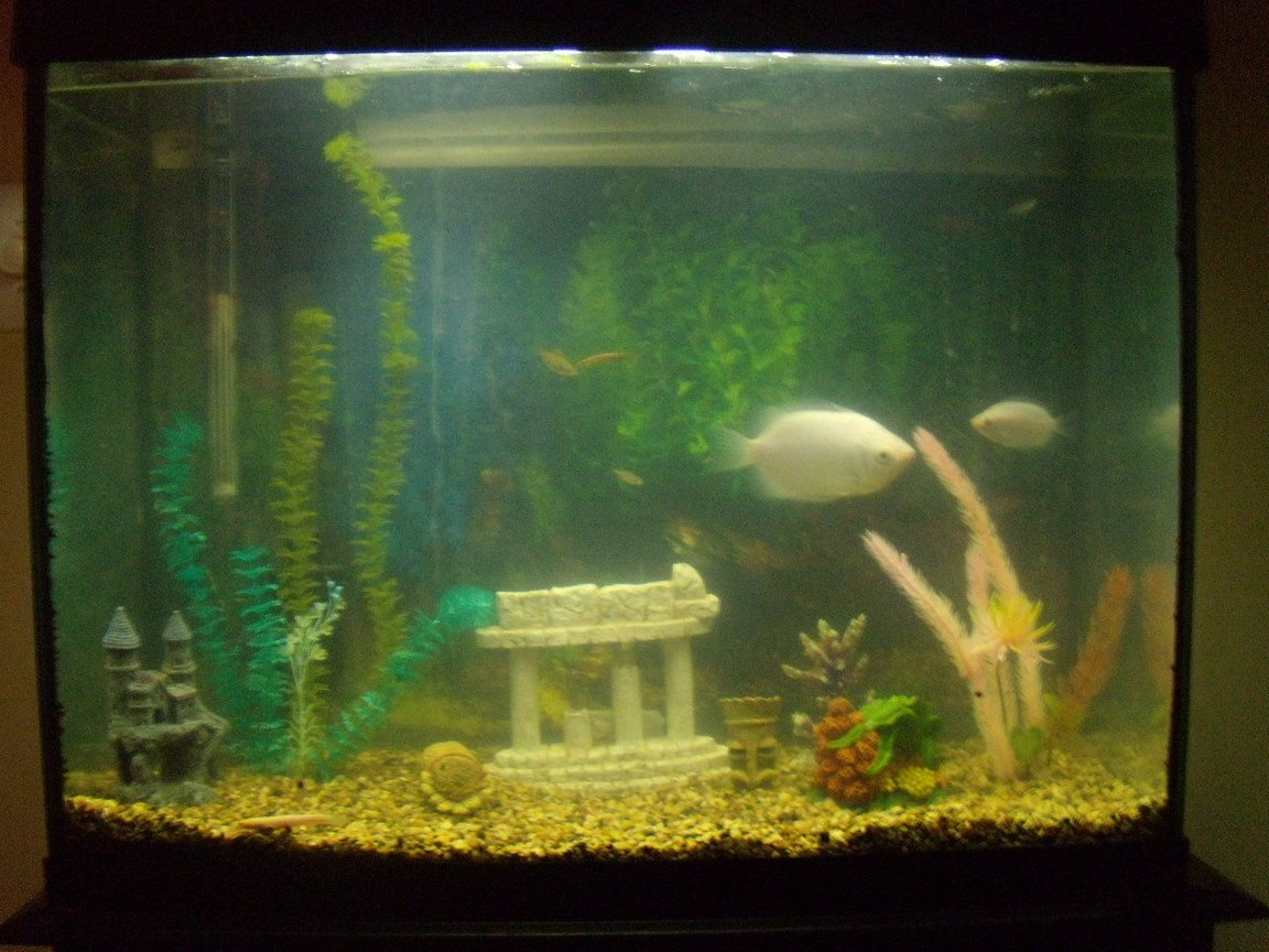 37 gallons freshwater fish tank (mostly fish and non-living decorations) - my tank after adding my decorations