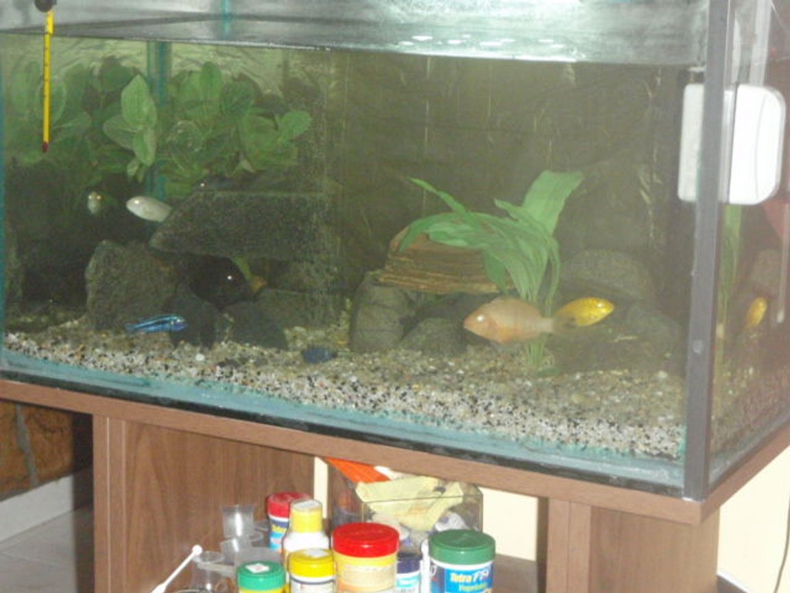 112 gallons freshwater fish tank (mostly fish and non-living decorations) - afrrican cichlid tank