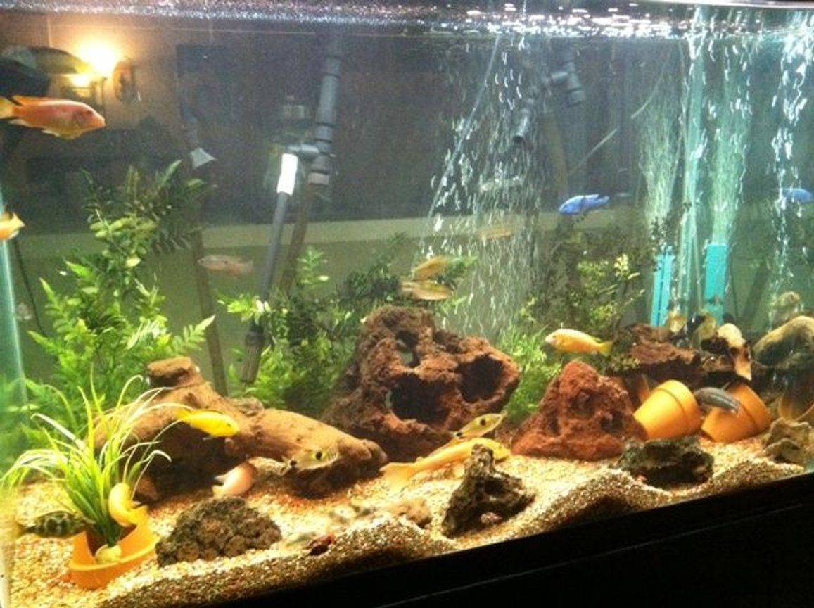 200 gallons freshwater fish tank (mostly fish and non-living decorations) - fish
