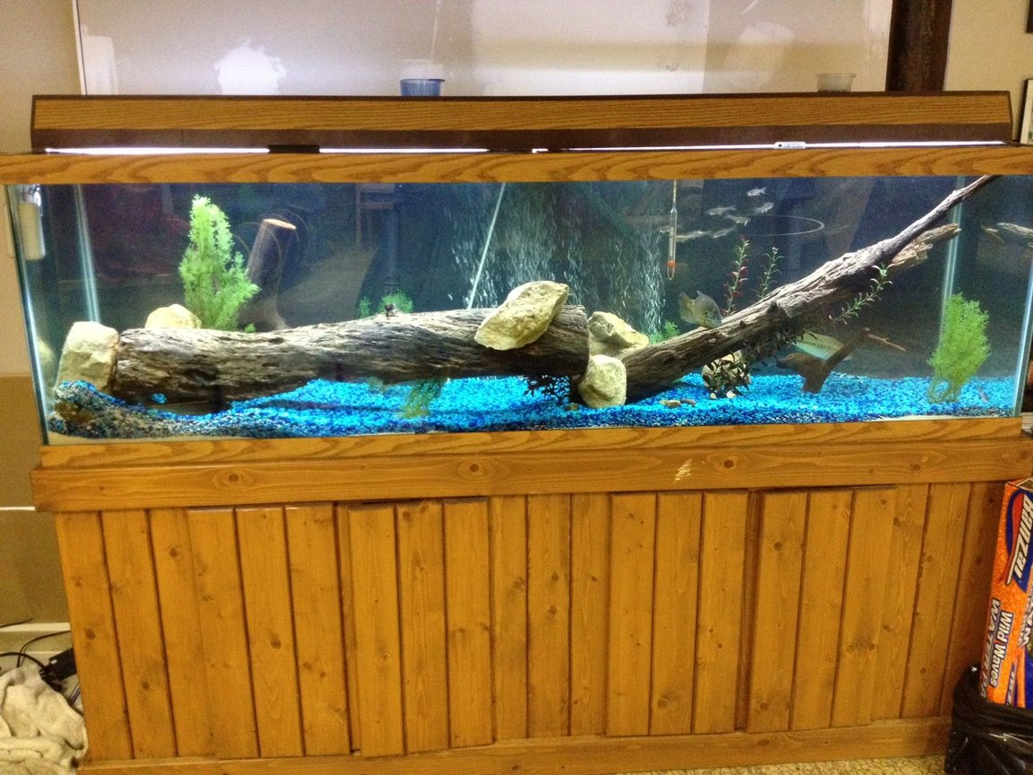 150 gallons freshwater fish tank (mostly fish and non-living decorations) - Picture of my main tank.
