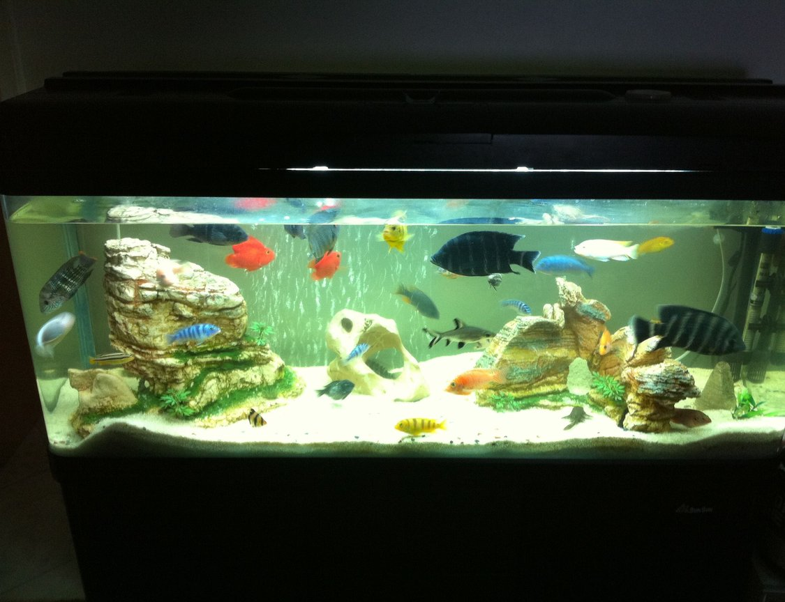 40 gallons freshwater fish tank (mostly fish and non-living decorations) - Sandy rocks