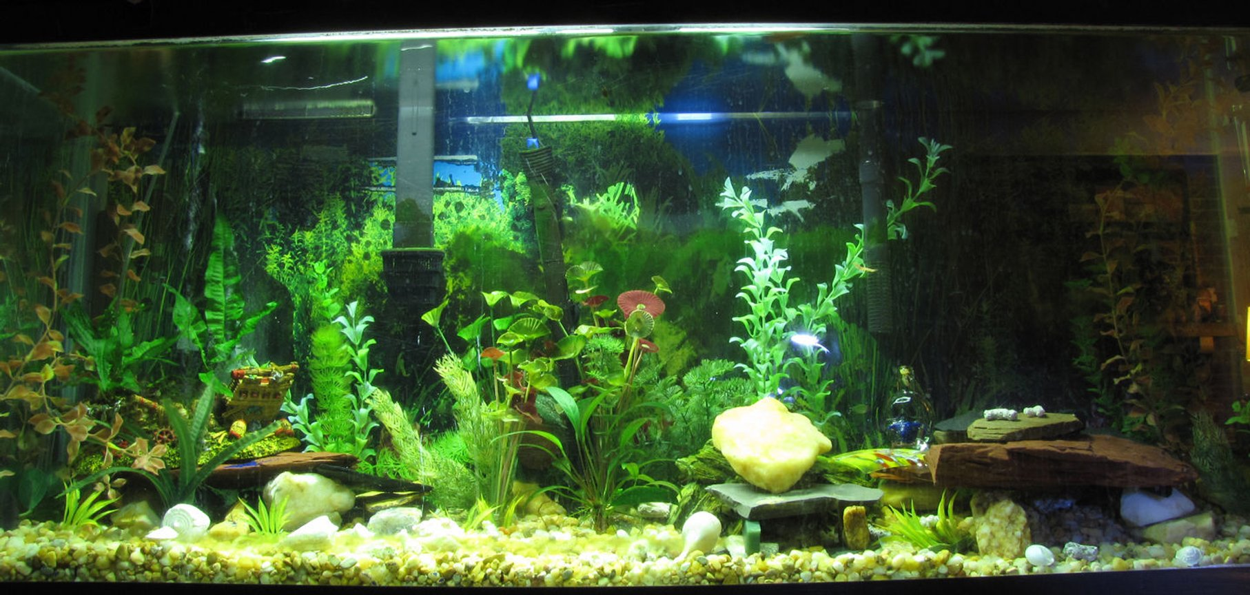 55 gallons freshwater fish tank (mostly fish and non-living decorations) - This is my 55gal freshwater.