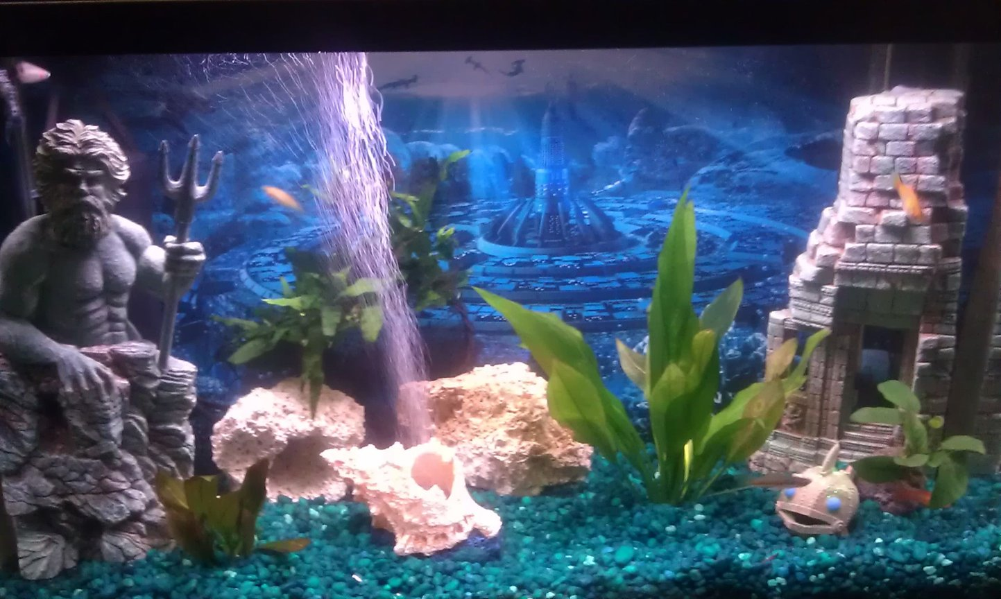 29 gallons freshwater fish tank (mostly fish and non-living decorations) - 29 Gallon Livebearer Aquarium
