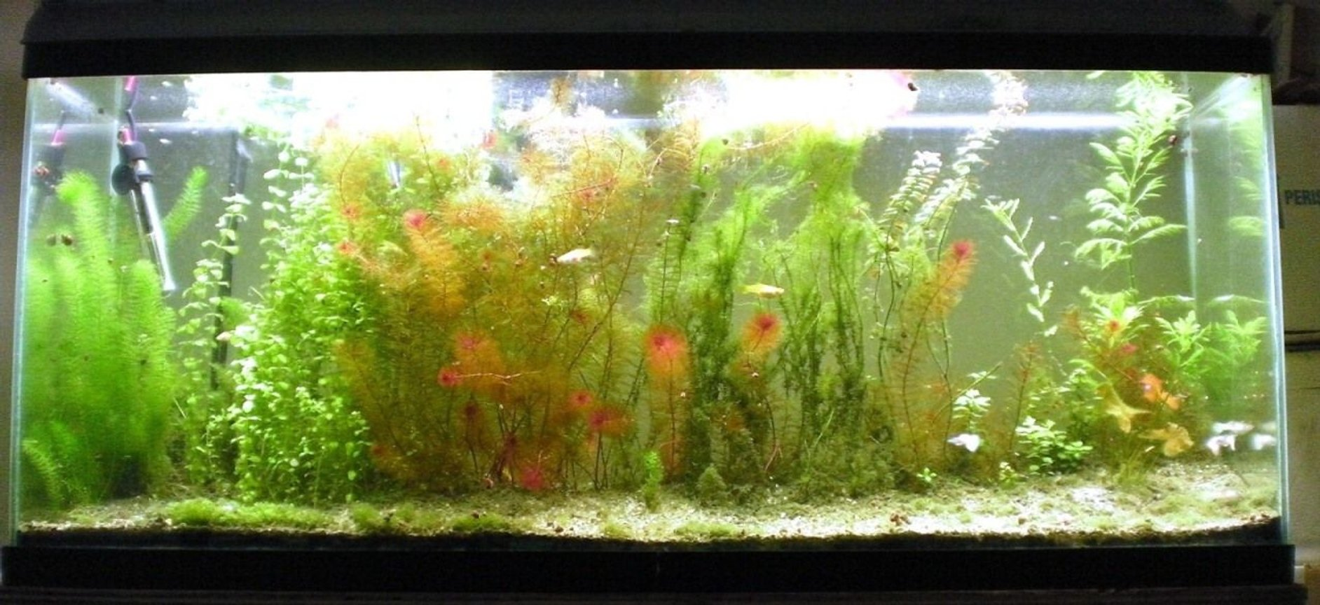 75 gallons freshwater fish tank (mostly fish and non-living decorations) - 55 gallon aquarium