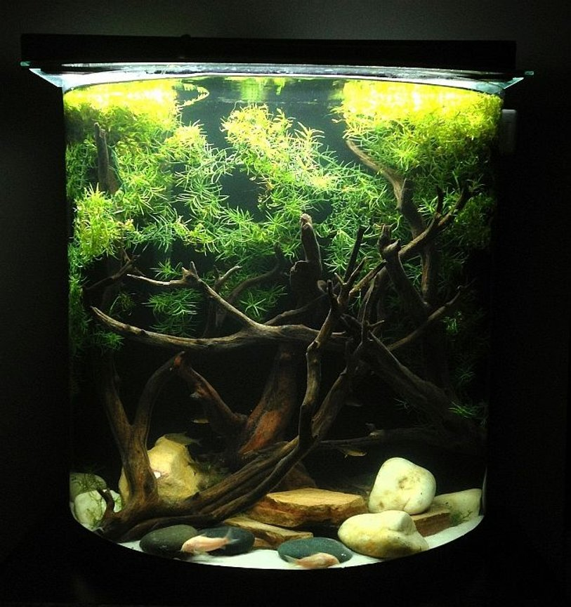 20 gallons freshwater fish tank (mostly fish and non-living decorations) - 20 Gallon Tank