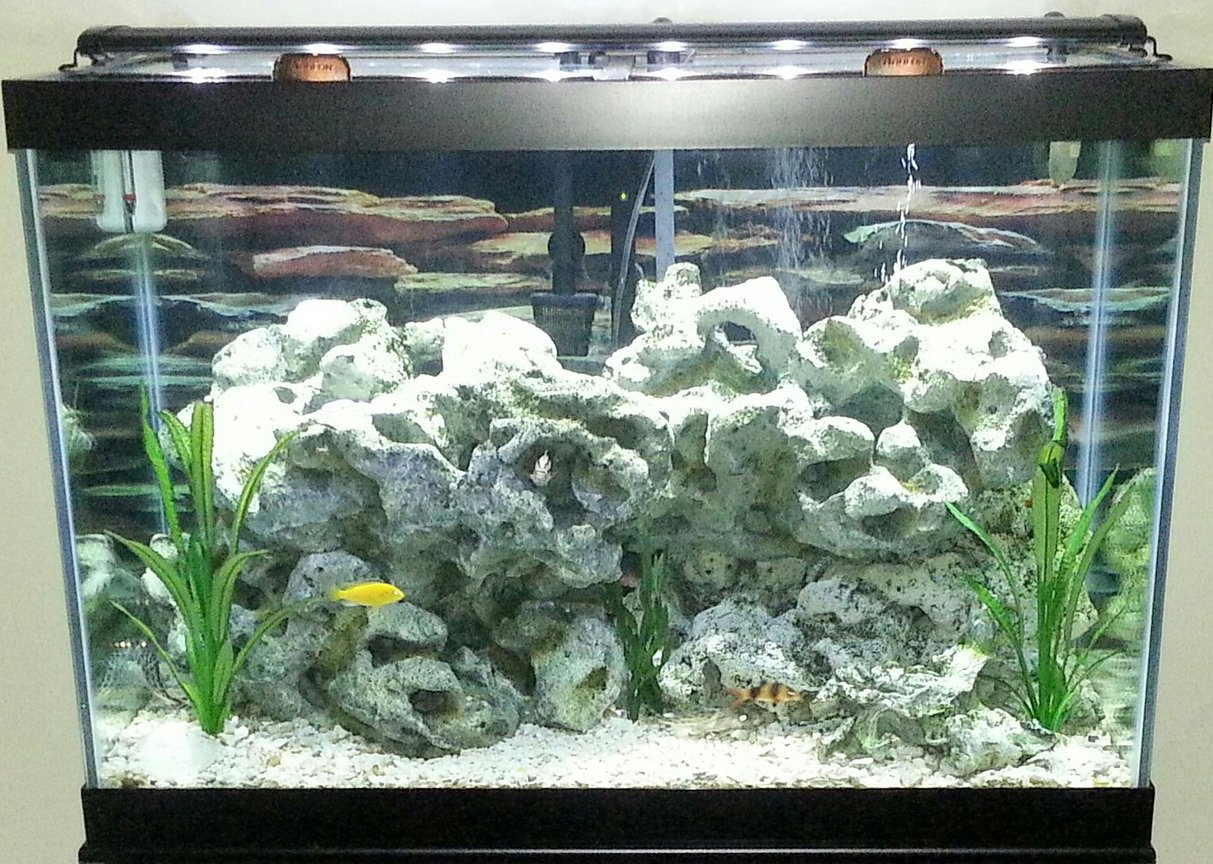 65 gallons freshwater fish tank (mostly fish and non-living decorations) - 65 gallon Cichlid Tank